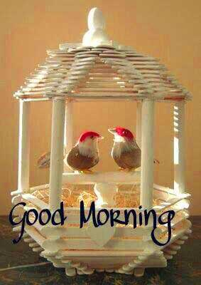 Good Morning Images With Birds