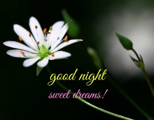 good-night-sweet-dreams-image