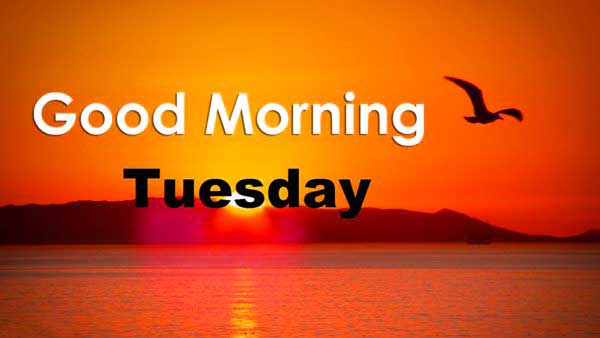 Good Morning  Tuesday Morning Quotes Images Wallpaper Pictures HD Download for Whatsaap