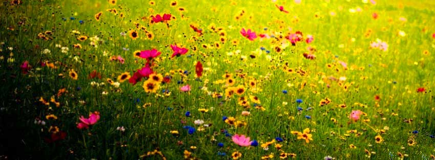 flowers-nature-facebook-cover-timeline-wallpaper