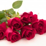 133+ Beautiful Pictures Of Flower Images Wallpaper Photos Photographs Pics