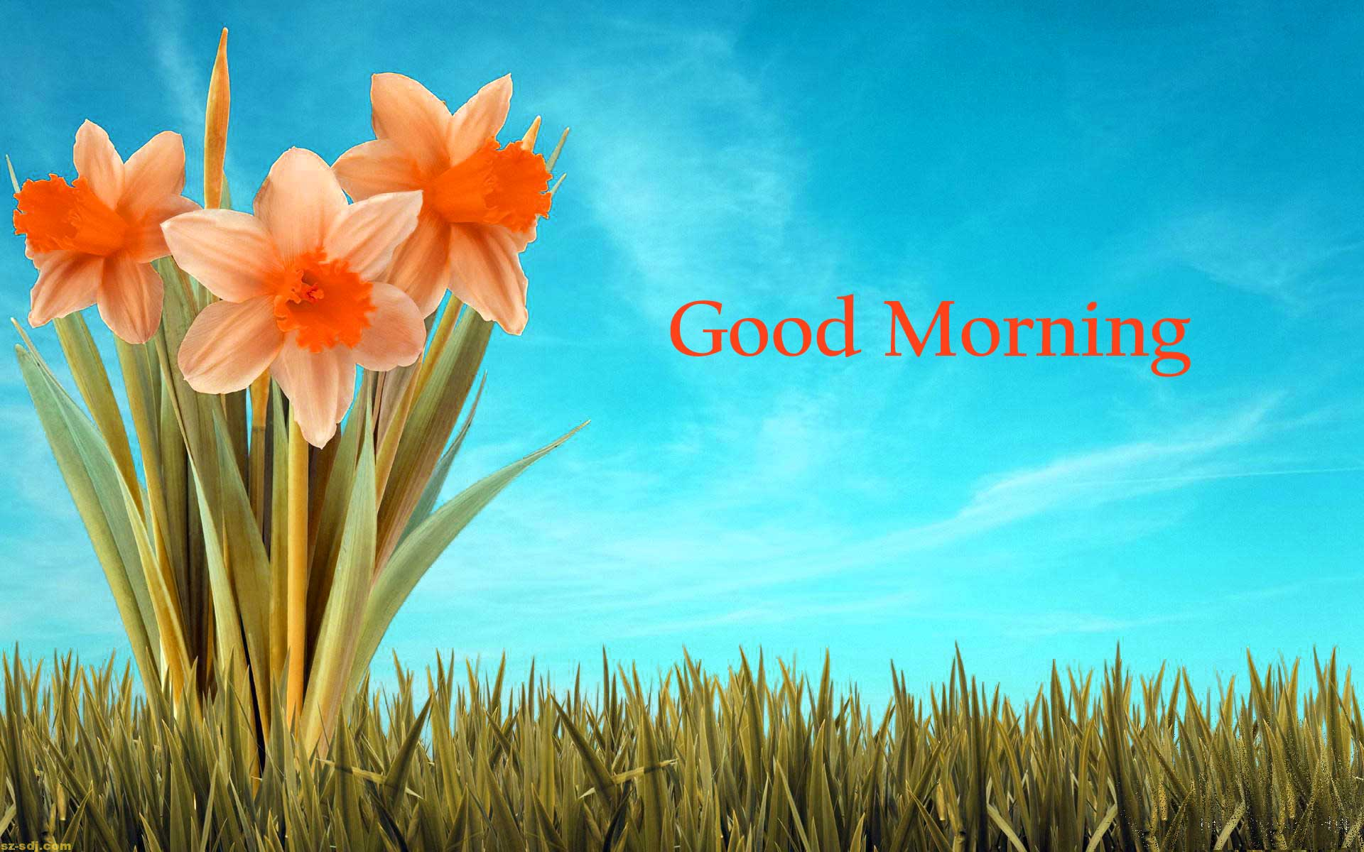 157 Good Morning Flowers s Pics HD Download Here
