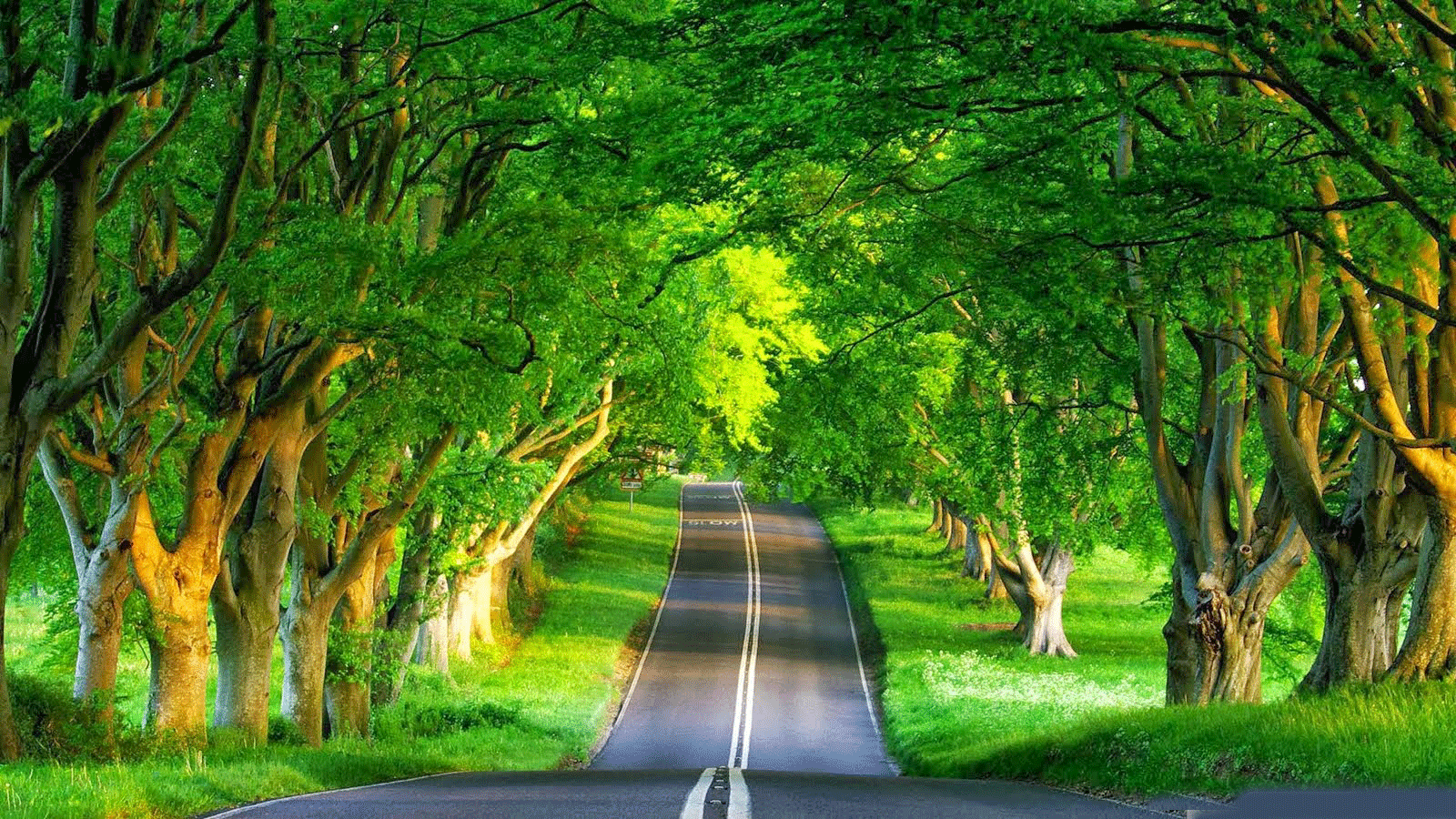 Nature Images Wallpapers Pics