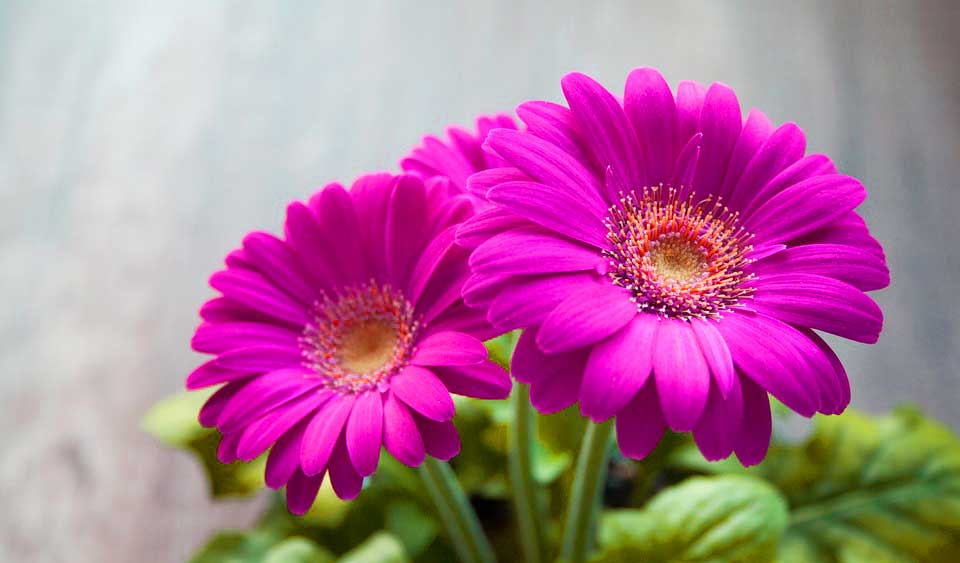 HD Flower Pictures Download