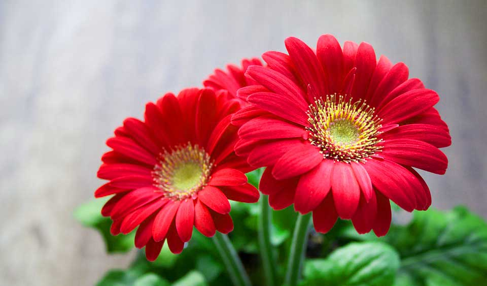 beautiful pictures of flower images wallpaper photos, Natural flower
