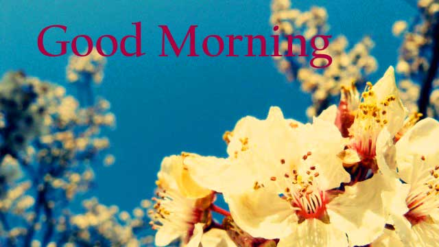 hd Good Morning Flowers Images Wallpaper Pictures for Whatsaap