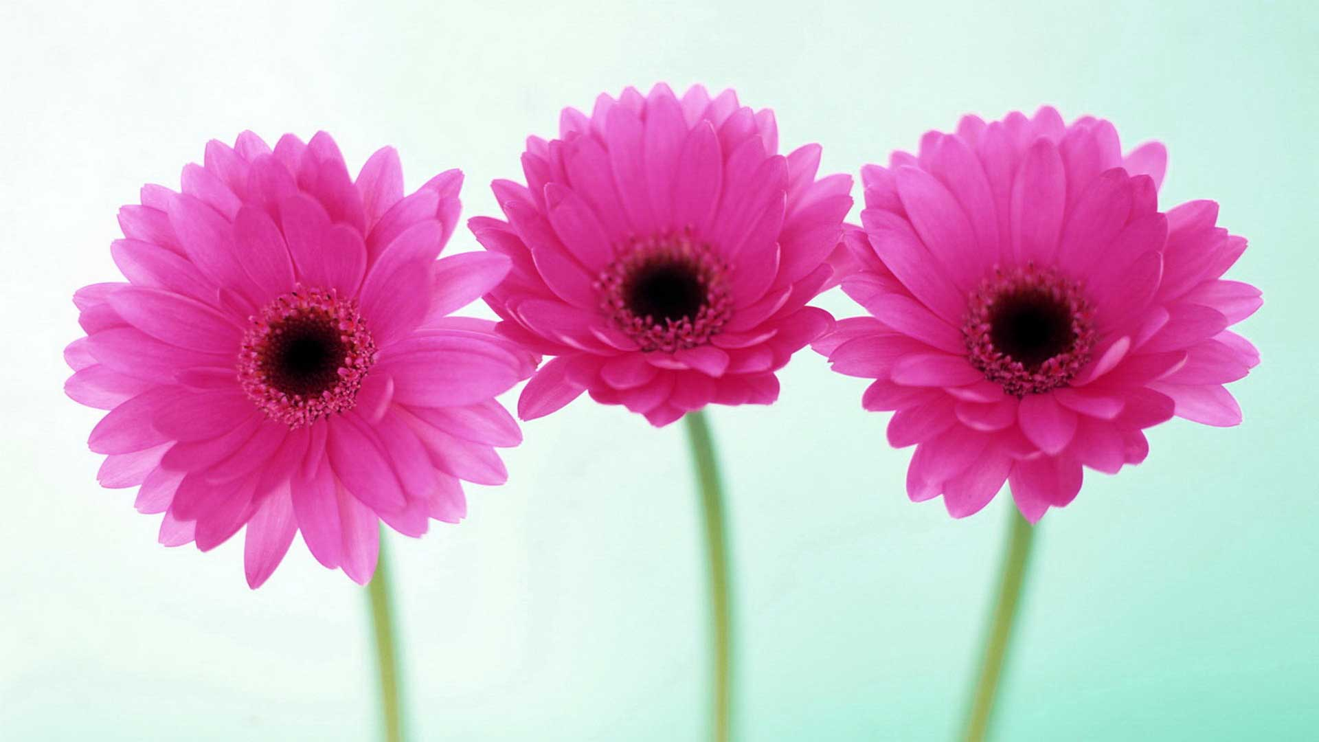 flower pictures /wallpaper Phoot Pics Free Download