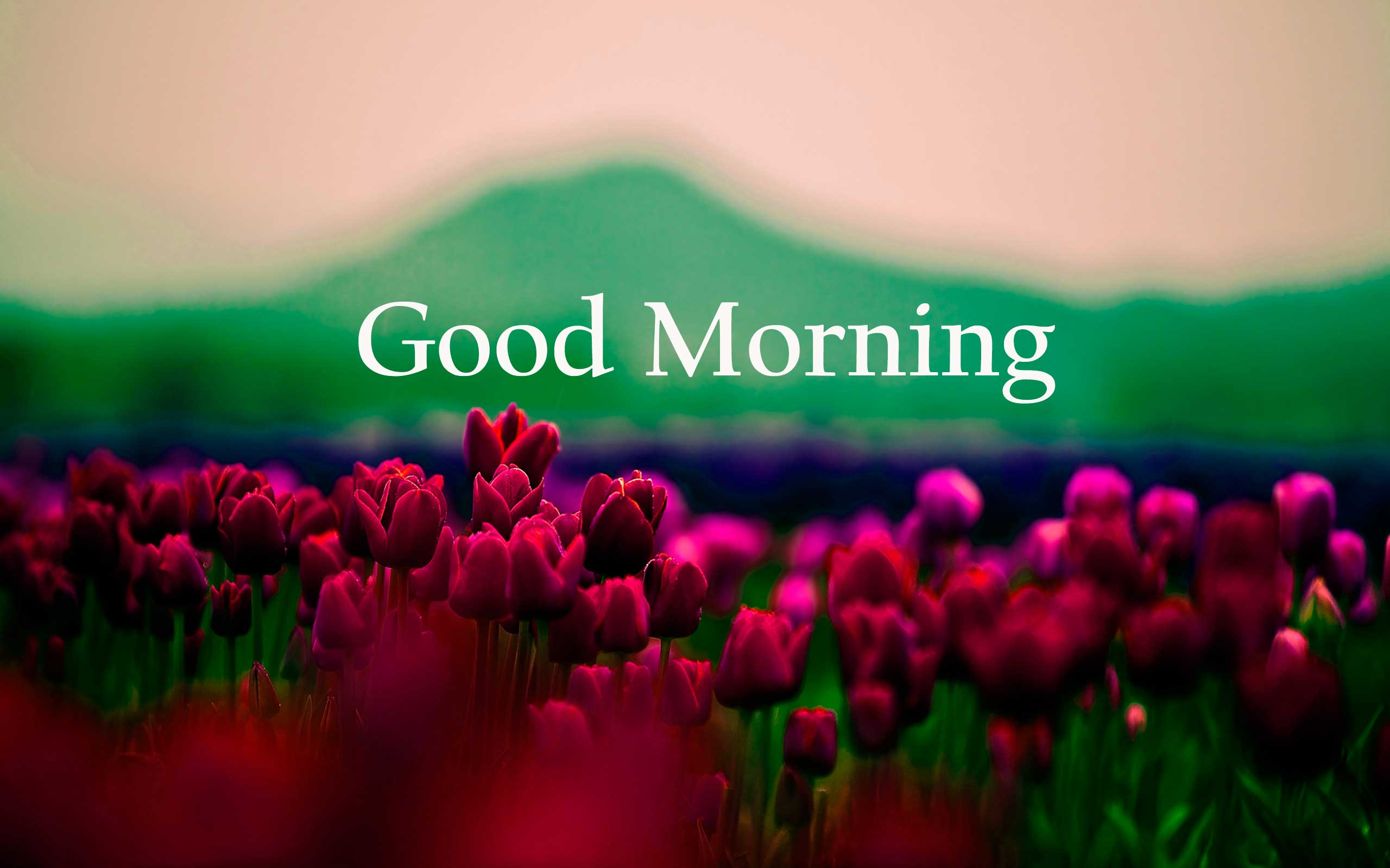 Good Morning Winter Flower : Good morning flowers images photos pics hd download here