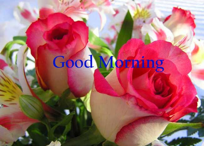 flowers good morning Images Photo Pictures Wallpaper Pics for Whatsaap HD Download