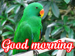 cute good morning pics Photo Wallpaper Download