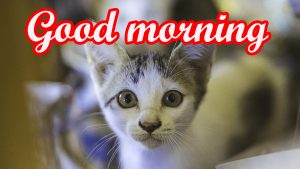cute good morning pics Wallpaper HD Download