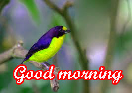 Cute Gud Morning Images Wallpaper Pictures Download