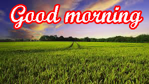 Different Good Morning Images Wallpaper Pictures Download