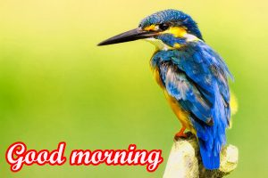 Different Good Morning Images Wallpaper Download