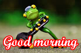 Funny Sunday Good Morning Images Wallpaper Download