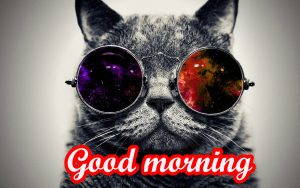 Funny Sunday Good Morning Images Wallpaper Pics Download