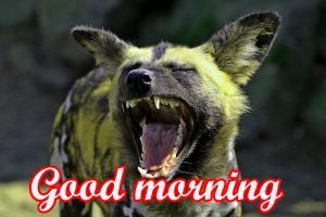 Funny Sunday Good Morning Images Pictures Free Download