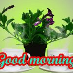 Good Morning Nice Pic Images Wallpaper For Whatsaap