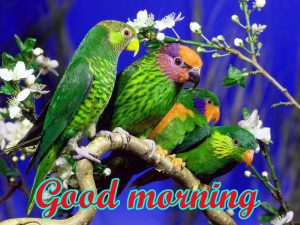 Good Morning All images Pictures Download