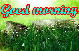 Good Morning Nice Pic Images Wallpaper Pictures Download