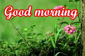 Very Beautiful Good Morning Images Pics HD Download