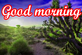 Very Beautiful Good Morning Images Photo for Whatsaap