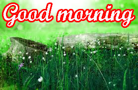 Very Beautiful Good Morning Images