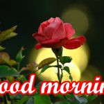Very Beautiful Good Morning Images Photo Pics For Whatsaap