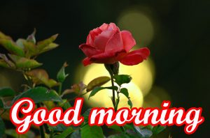Very Beautiful Good Morning Images Pics With Red Rose