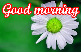 Very Beautiful Good Morning Images Wallpaper Download