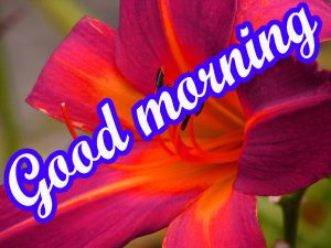 Very Beautiful Good Morning Images Wallpaper Pics Download