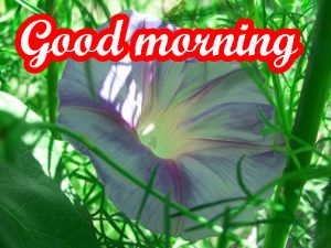 Very Nice Good Morning Images Photo HD Download