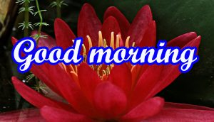 Very Nice Good Morning Images photo for Whatsaap