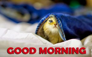 Funny Good Morning Images Photo Pics HD Download for Whatsaap