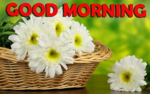 Good Morning Wishes Images Wallpaper Pics With Flower