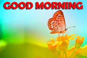 Good Morning Wishes Images Wallpaper Pictures HD With Butterfly