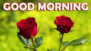 Good Morning Wishes Images Wallpaper Pics With Red Rose