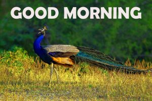 Good Morning Wishes Images Wallpaper Pics