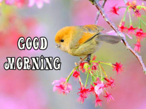 Beautiful Gud Mrng Images Wallpaper for Whatsapp
