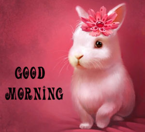 cute good morning Photo Wallpaper Pics for Facebook