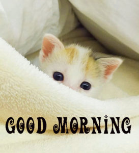 cute good morning Wallpaper Pics Free for Whatsapp
