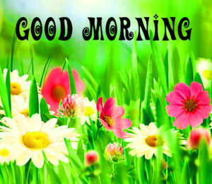 Gud Morning Pics With Flower