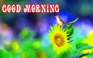 Gud Morning Images Wallpaper Pictures HD Download