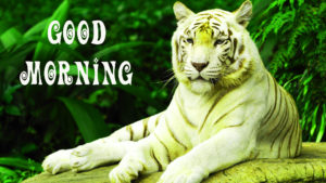 Animal good morning Images Wallpaper Photo Pics Download