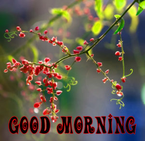 Spring Good Morning Wishes Images Wallpaper Pictures for Facebook