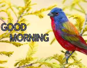 Good Morning Images Photo HD Free Download