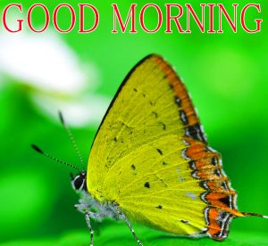 Gud / Gd mrng Images Wallpaper Pics for Facebook friend