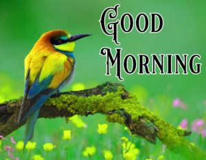 Nature Good Morning Image Wallpaper Free Download
