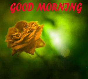 Beautiful Flower Good Morning Wishes Images Pics Free Download