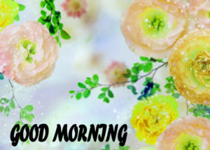 Beautiful Flower Good Morning Wishes Images Pictures Wallpaper